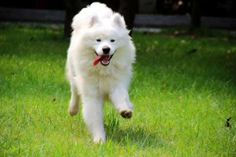 狗狗一生中,最重要的四样,你家狗狗拥有几个了